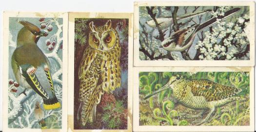 brooke-bond-bird-cards-tunnicliffe-1965